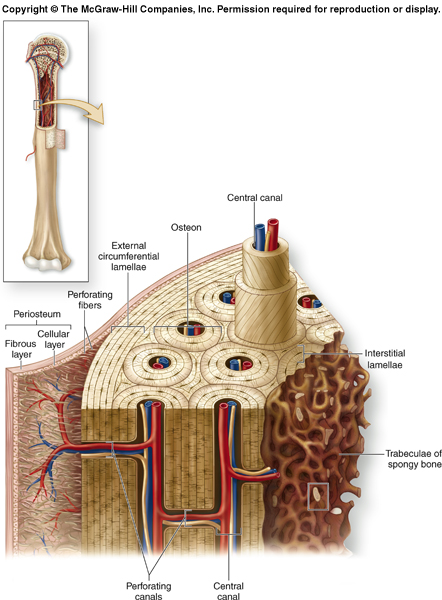 Biology 156