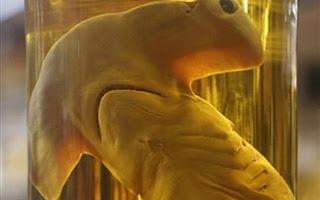 Ένα εκατομμύριο είδη ζώων μέσα σε γυάλες