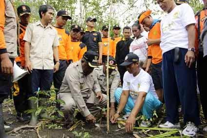 Tanam Pohon Bakau, Redam Tsunami di Manokwari
