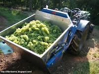 trattore uva vendemmia