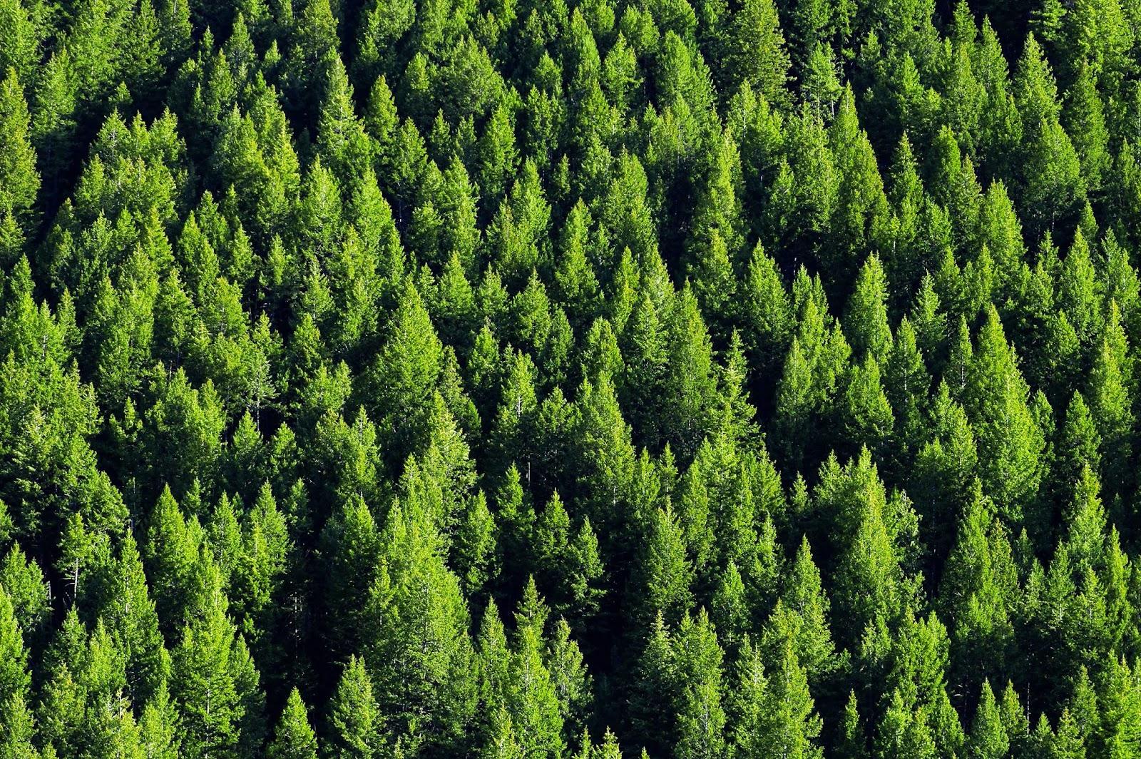 Le Idrostufe A Pellet : Fiamma verde maggio