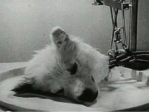 O experimento bizarro de Sergei Brukhonenko
