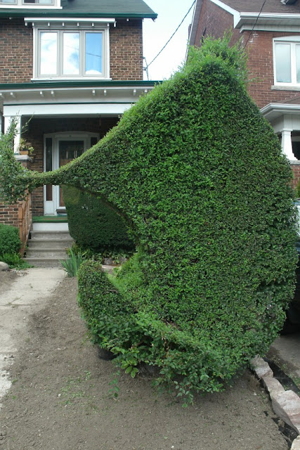 Another view of freeform topiary hedging by garden muses: a toronto gardening  blog