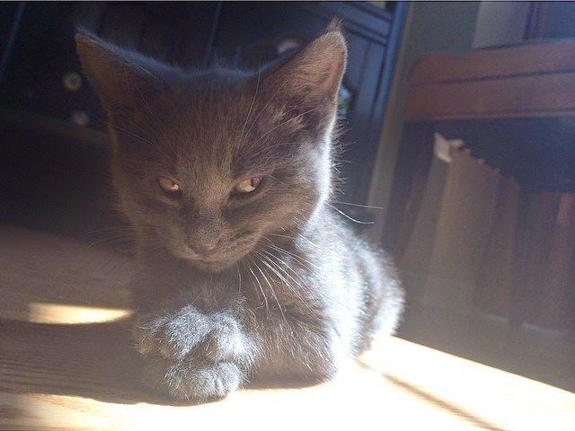 Funny cats - part 99 (40 pics + 10 gifs), cat pictures, cat planning something evil