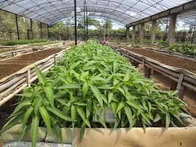 Membuat kebun organik untuk Pemula