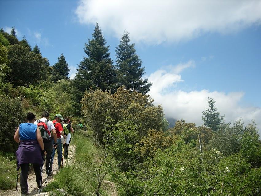 NORDIC WALKING SIERRA DE GRAZALEMA