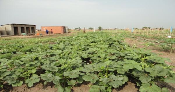 Zuid-Soedan: kansen voor Nederlandse tuinders