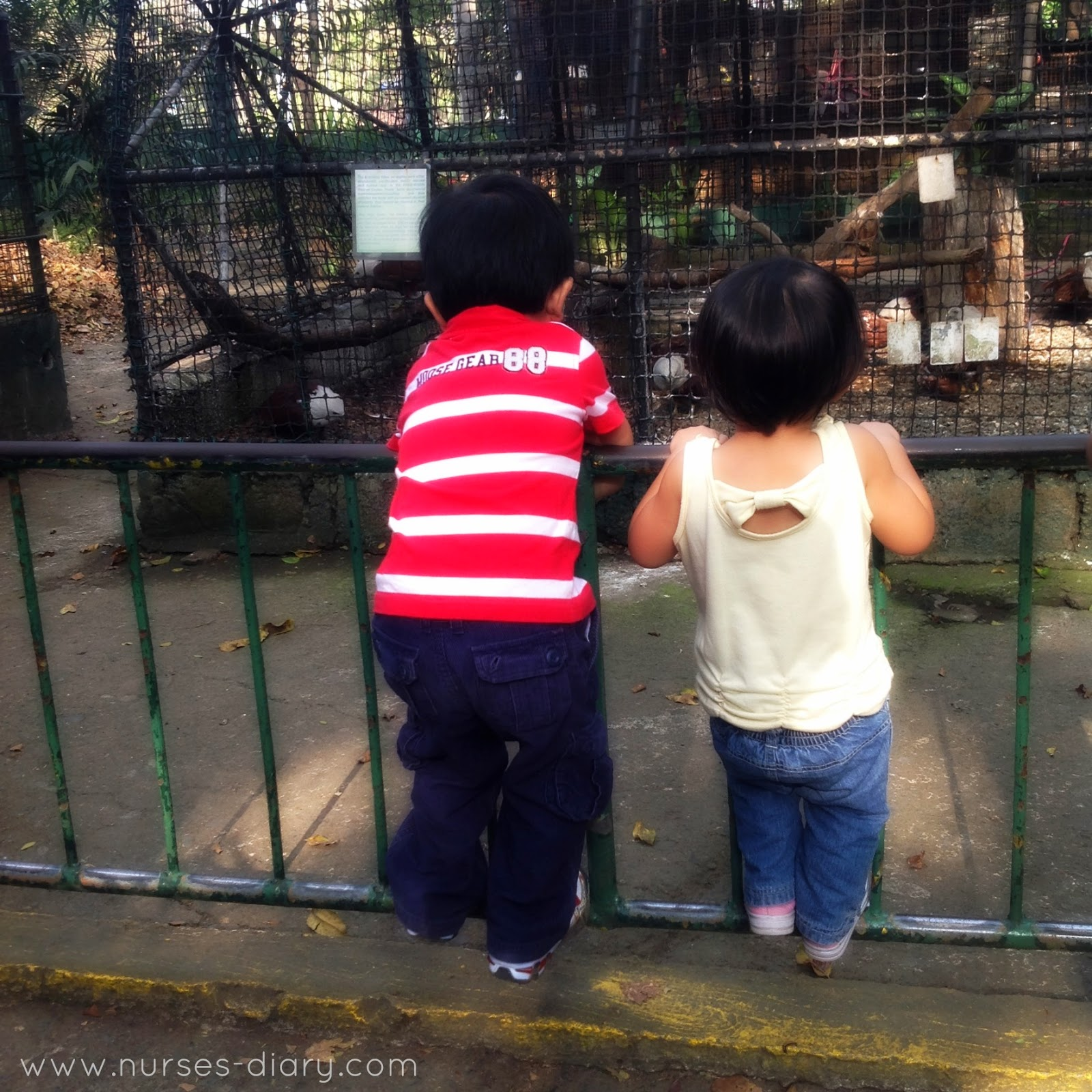 Family Weeked at Ninoy Aquino Wildlife Park