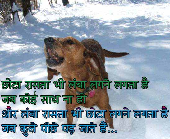 Quotes Dog Hindi Facebook Status Funny Wording Comment