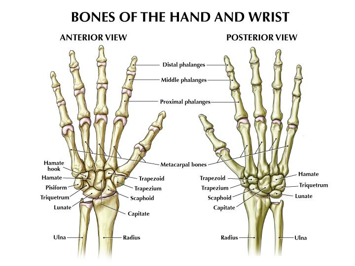 Anatomy of the Hand - Measures of hand function