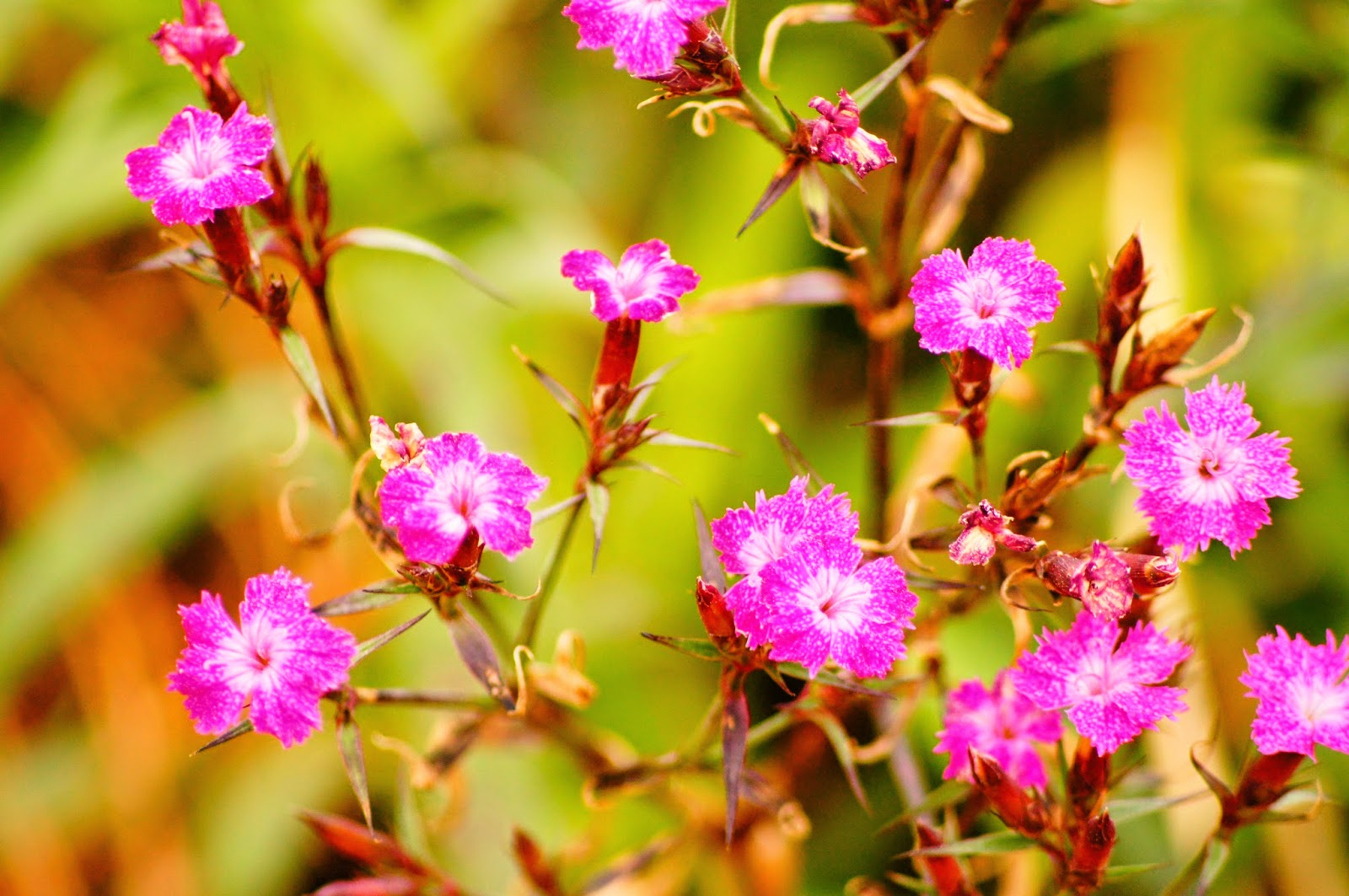 100 flowers royalty free pictures 1 million free picturesf