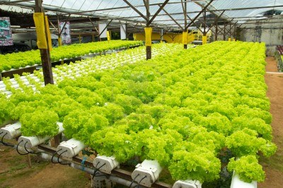 Vege wholesale for Indoor gardening market size