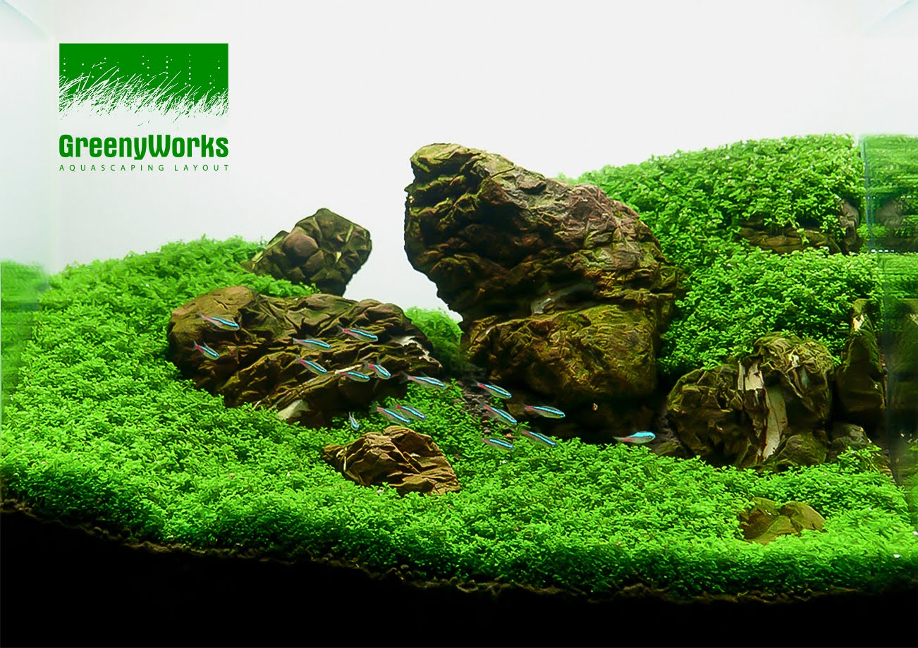 GreenyWorks Aquascaping Layout