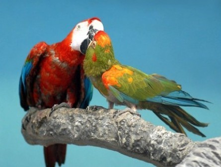 Beautiful love birds images - photo#22