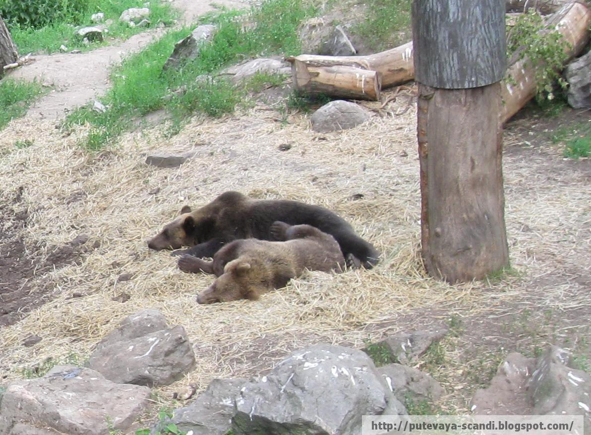 спят, как в берлоге