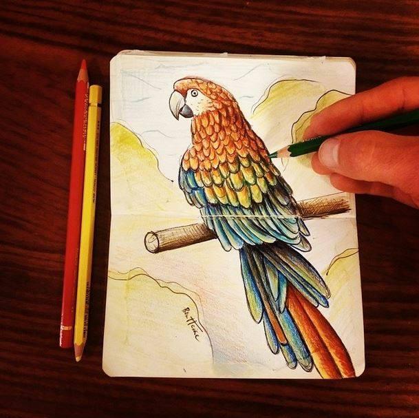 Parrot - pencils