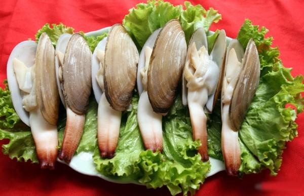 Chết cười với những đặc sản biển giống dương vật 6