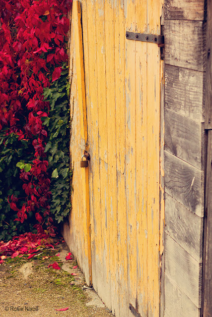 autumn in perthshire with the red leaves contrasting with the flaking yellow paint from the wooden garage door.
