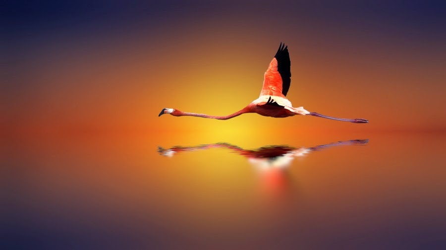 Search of Light by Josep Sumalla
