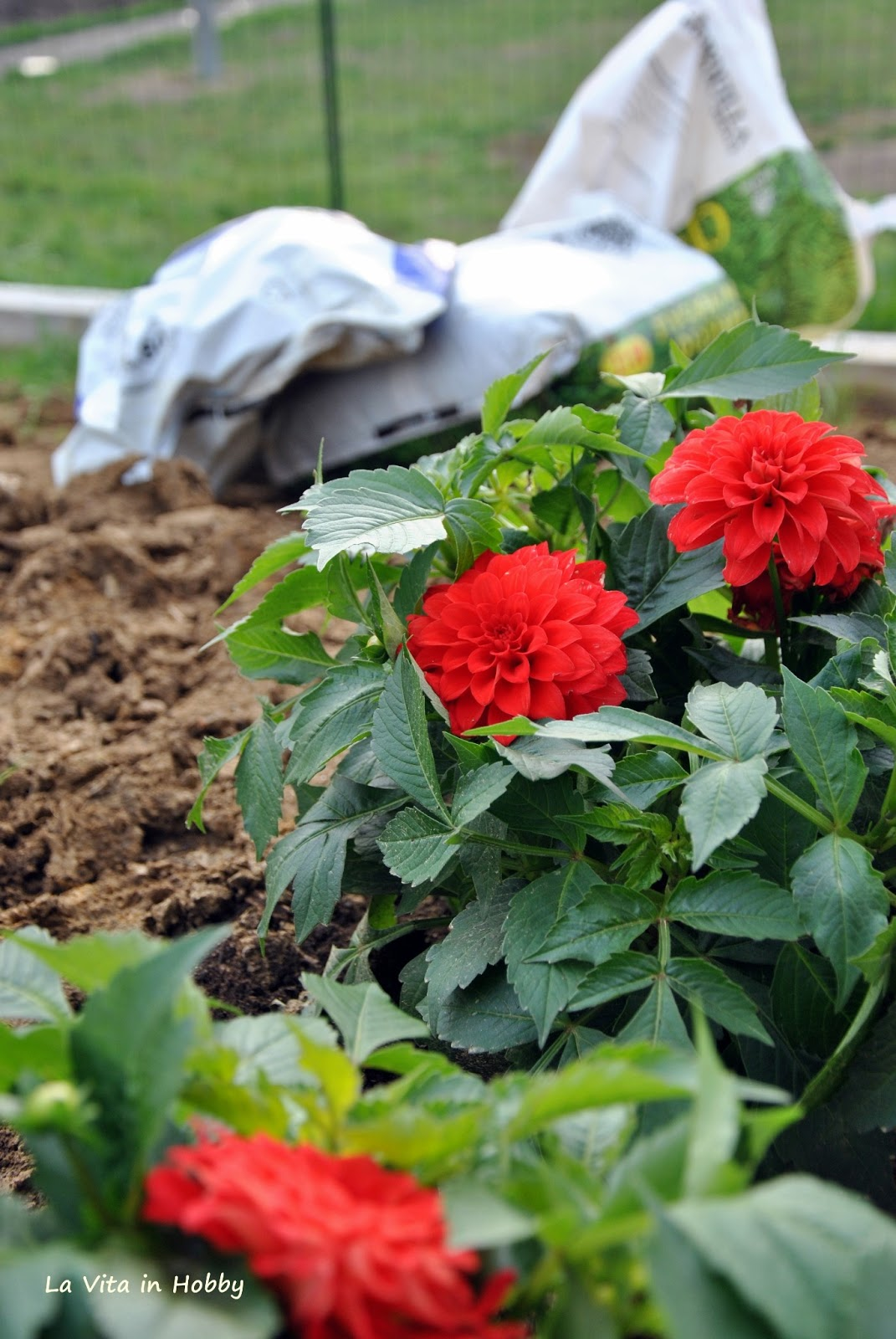 La vita in hobby aprile 2013 - Sacchi di terra per giardino ...