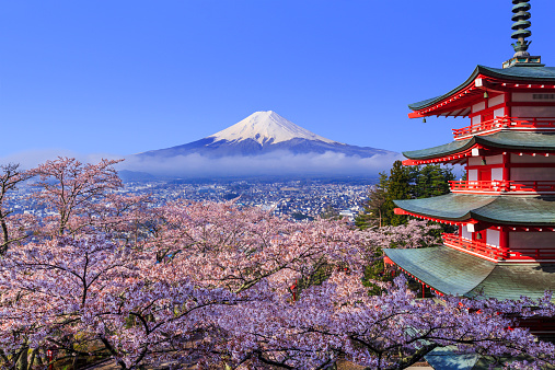 Discover the beauty of japan travel and see the world for Visit tokyo