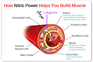 Does Nitric Oxide Build Muscle Mass
