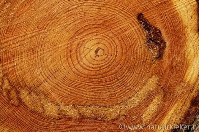 Natuurkieker manieren om leeftijd van bomen te bepalen - Hoe een boom te verlichten ...