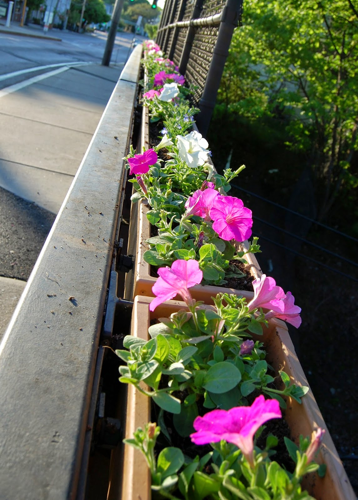 planter along railroad bridge railing 1