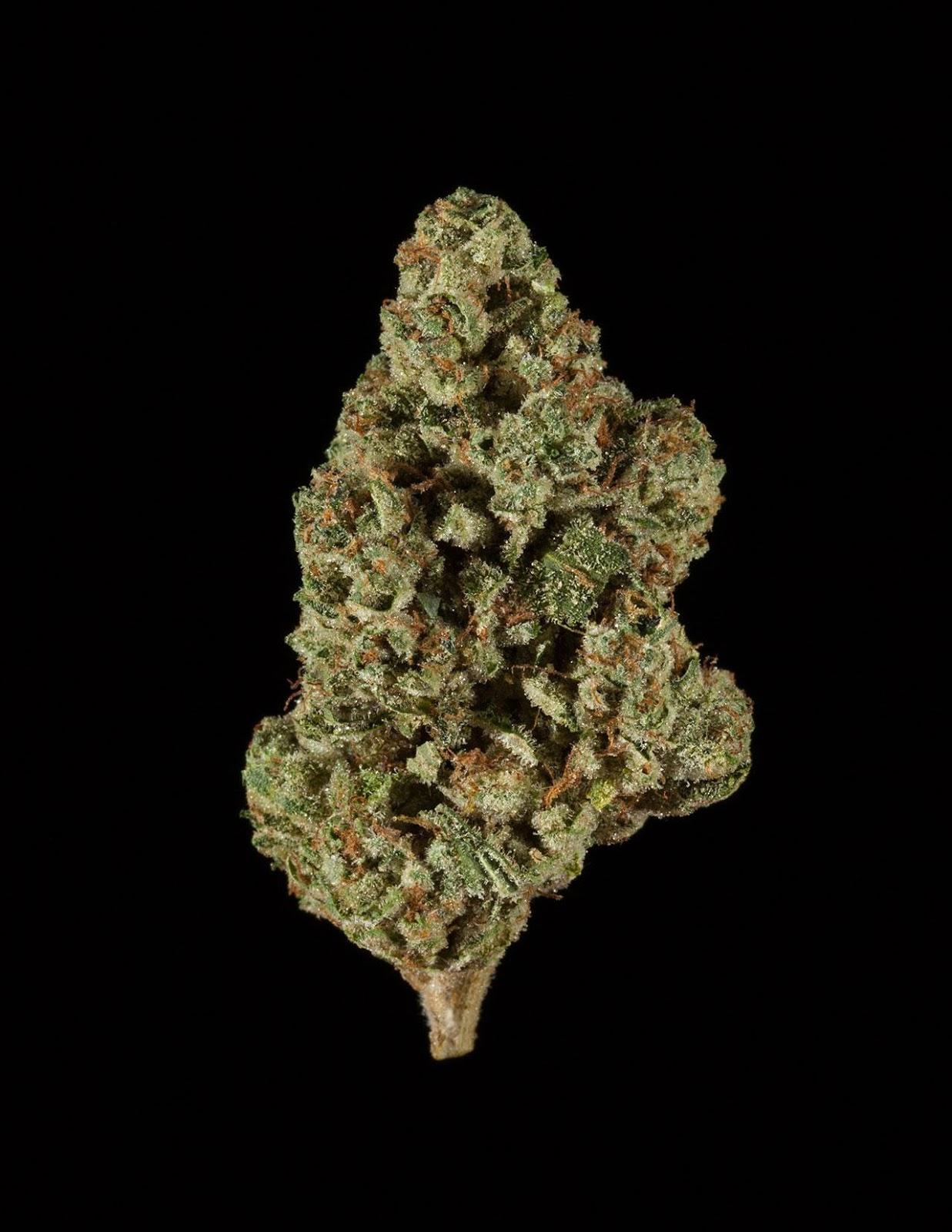 CBD OG | #CannabisCup