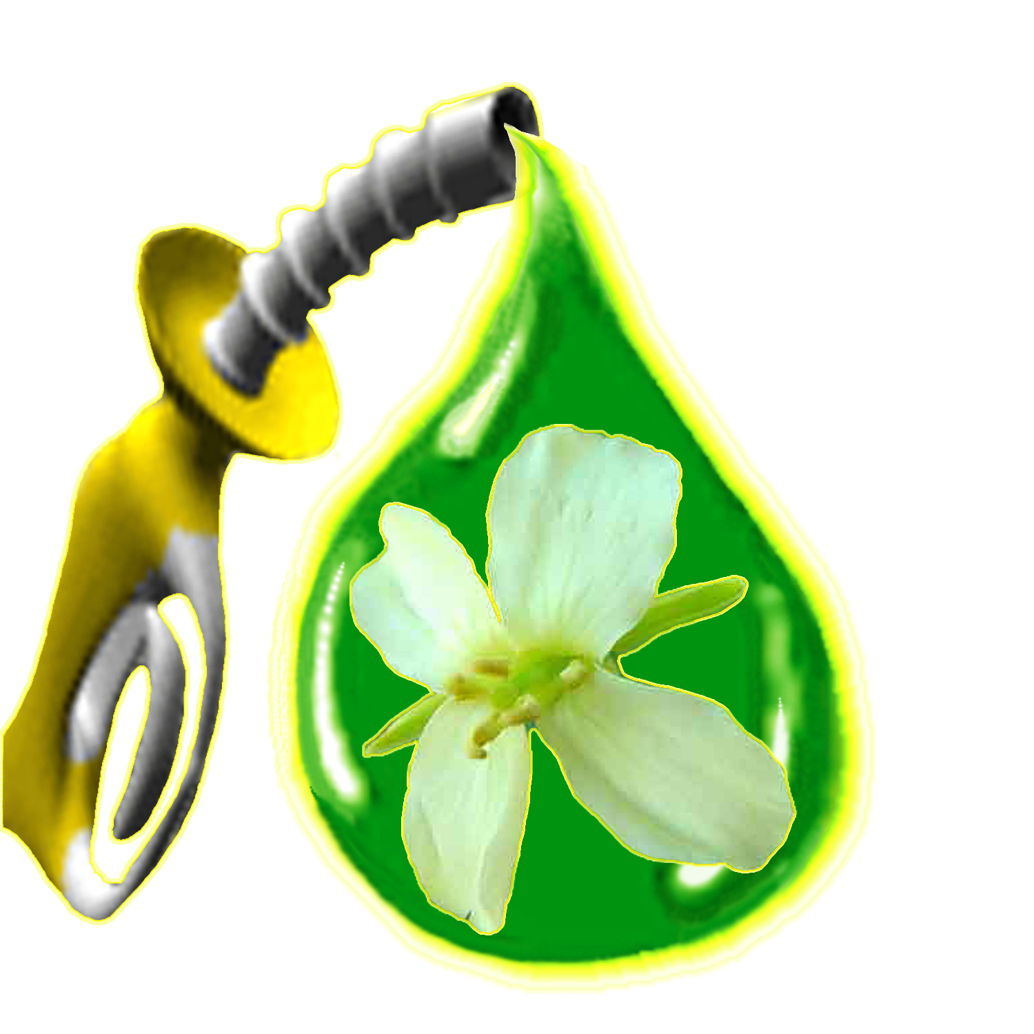 Biofuel Facts | Renewable Energy