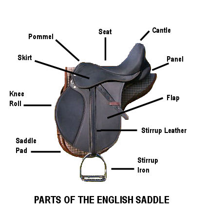 Delighted Horses Horse Tack