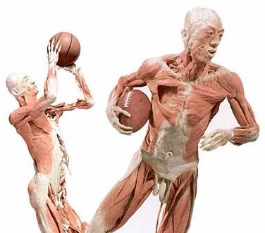 Anatomía deportiva