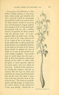 A page from The Field and Garden Vegetables of America (BioDivLibrary)