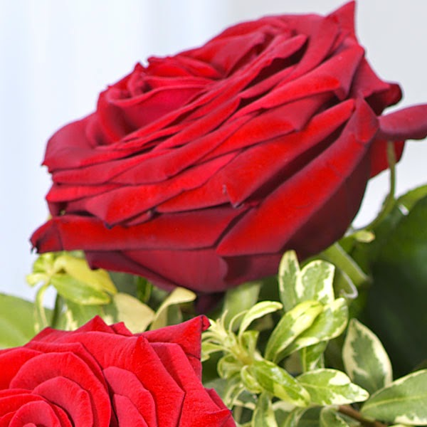 6 Red rose delivery in Spain with price