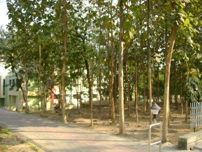 Sagwan Plantation