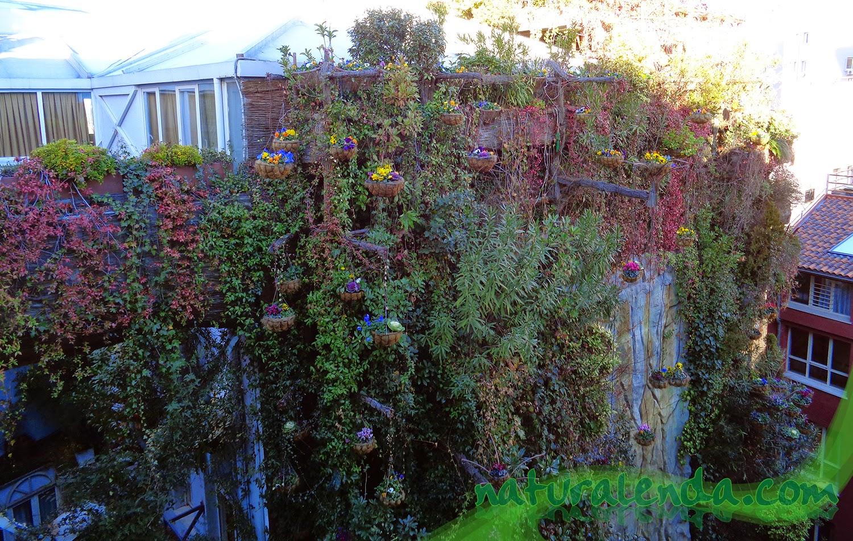 jardin vertical del hotel santo domingo