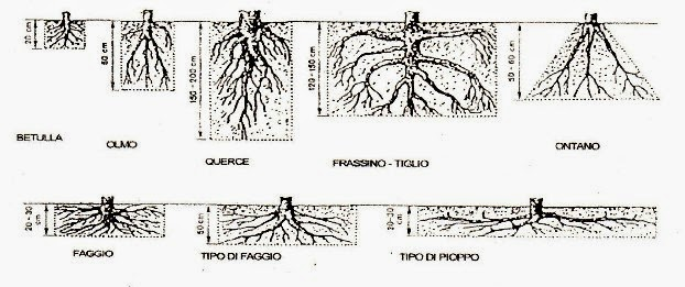 Alberi e piante per contrastare il dissesto idrogeologico - Piante striscianti per scarpate ...