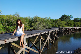 protect beach with mangrove, planting mangrove, reforestation, mangrove forest
