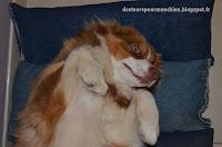 faire un matelas pour chien