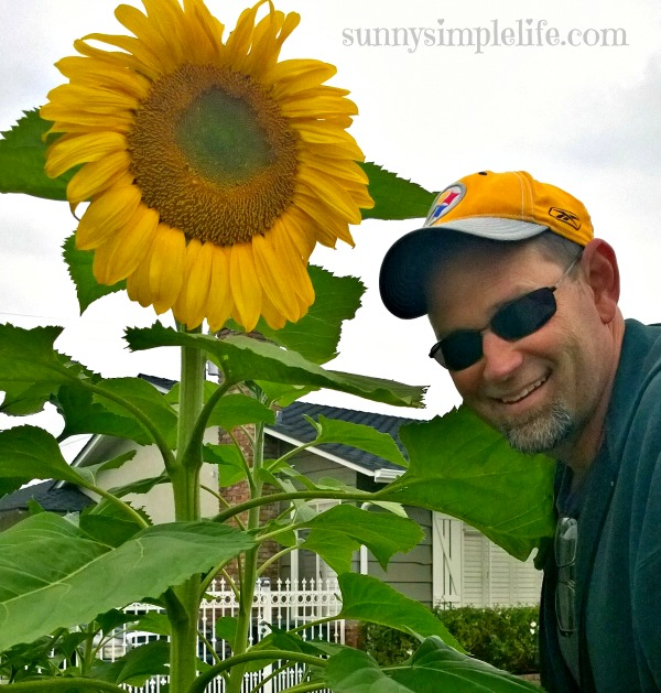 Growing sunflowers: tips and my favorites, handsome man with sunflower