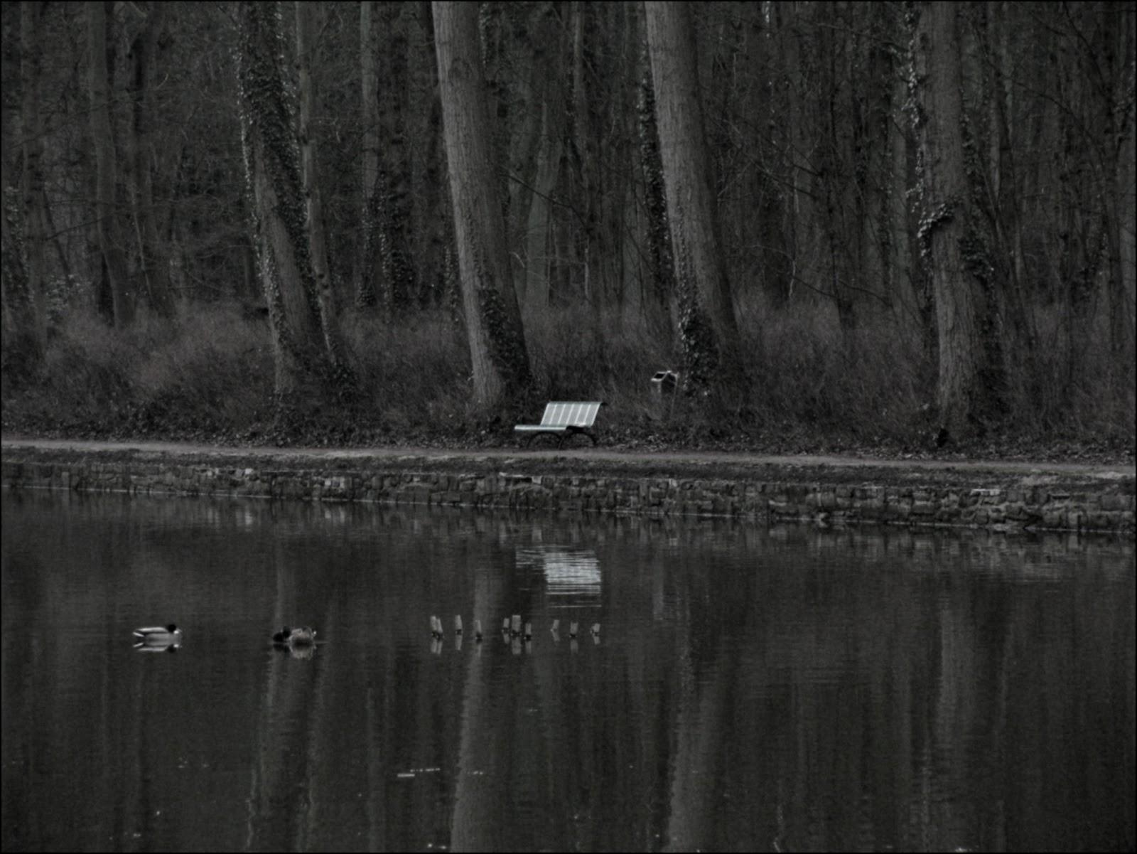 postcard peter skrzynecki belonging essay
