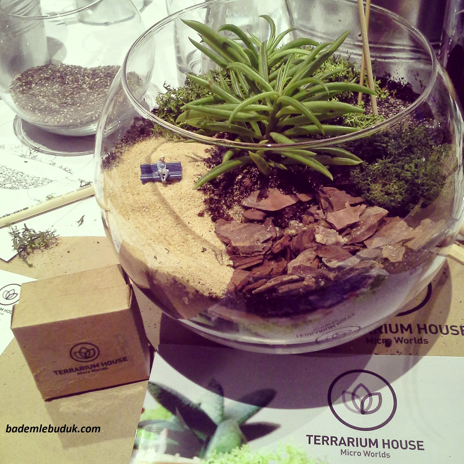 terrarium house - terrarium workshop - tohumdan gelen