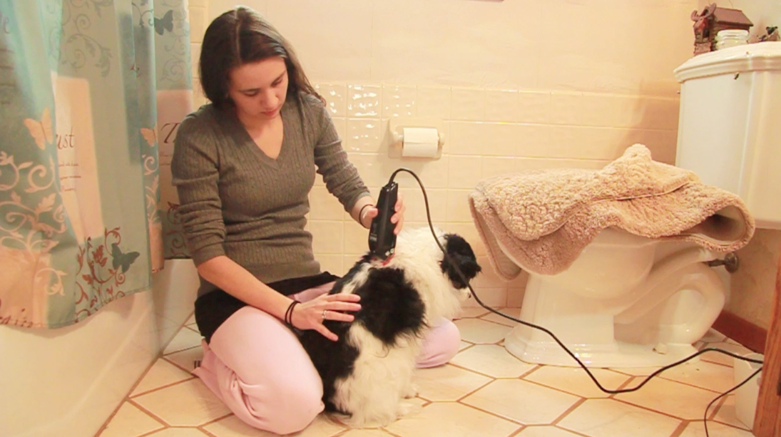 Shaving Your Dog at Home Using Clippers