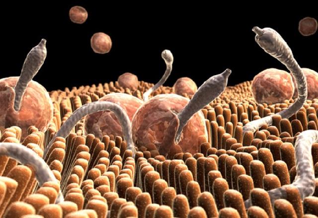 средства от глистов и паразитов