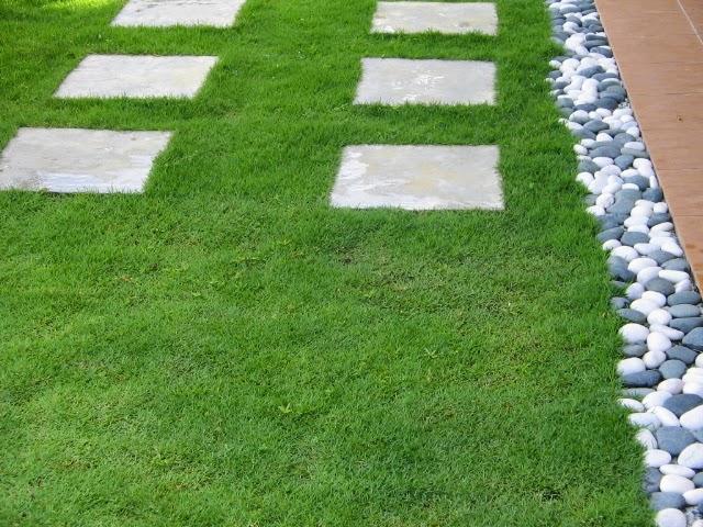 Rumput jepang | jual aneka rumput taman | rumput murah | pembuatan taman mininmalis