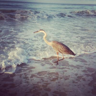 Perdido Key Florida, Johnson Beach