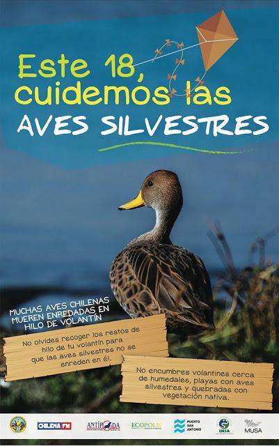 RECOGE TU HILO DE VOLANTIN Y SALVA A LAS AVES SILVESTRES