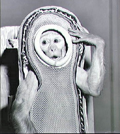 albert I the first monkey in space