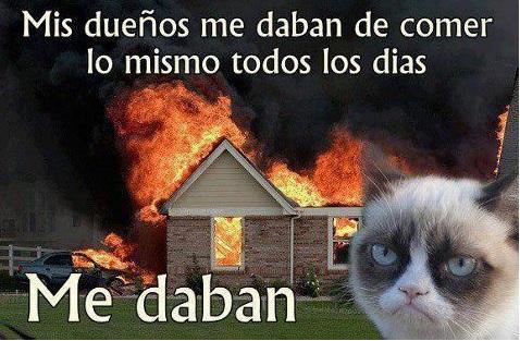 Humor de gatos