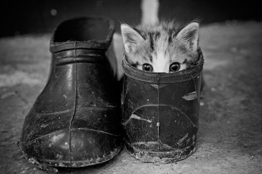 Cute Puss in Boots cute cats kitty